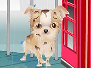 ټ Puppy in the house ټ
