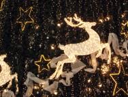 Christmas_night_Xmas_5009