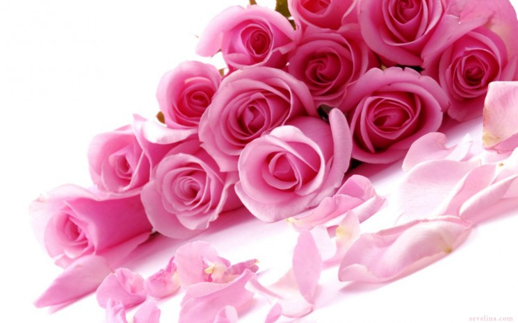 Valentine-days-Pink-Roses-Wallpaper 2014