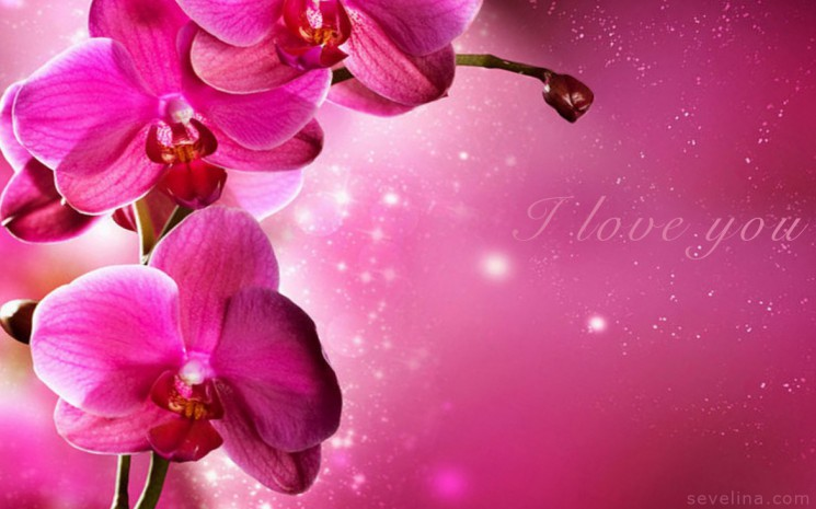 valentine-wallpapers-pink-flowers-wallpaper 2014
